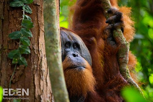 Die Tierwelt erholt sich dank des Umweltprojekts von Schrott24