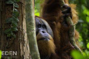 Die Tierwelt erholt sich durch die Aufforstungsinitiative von Schrott24