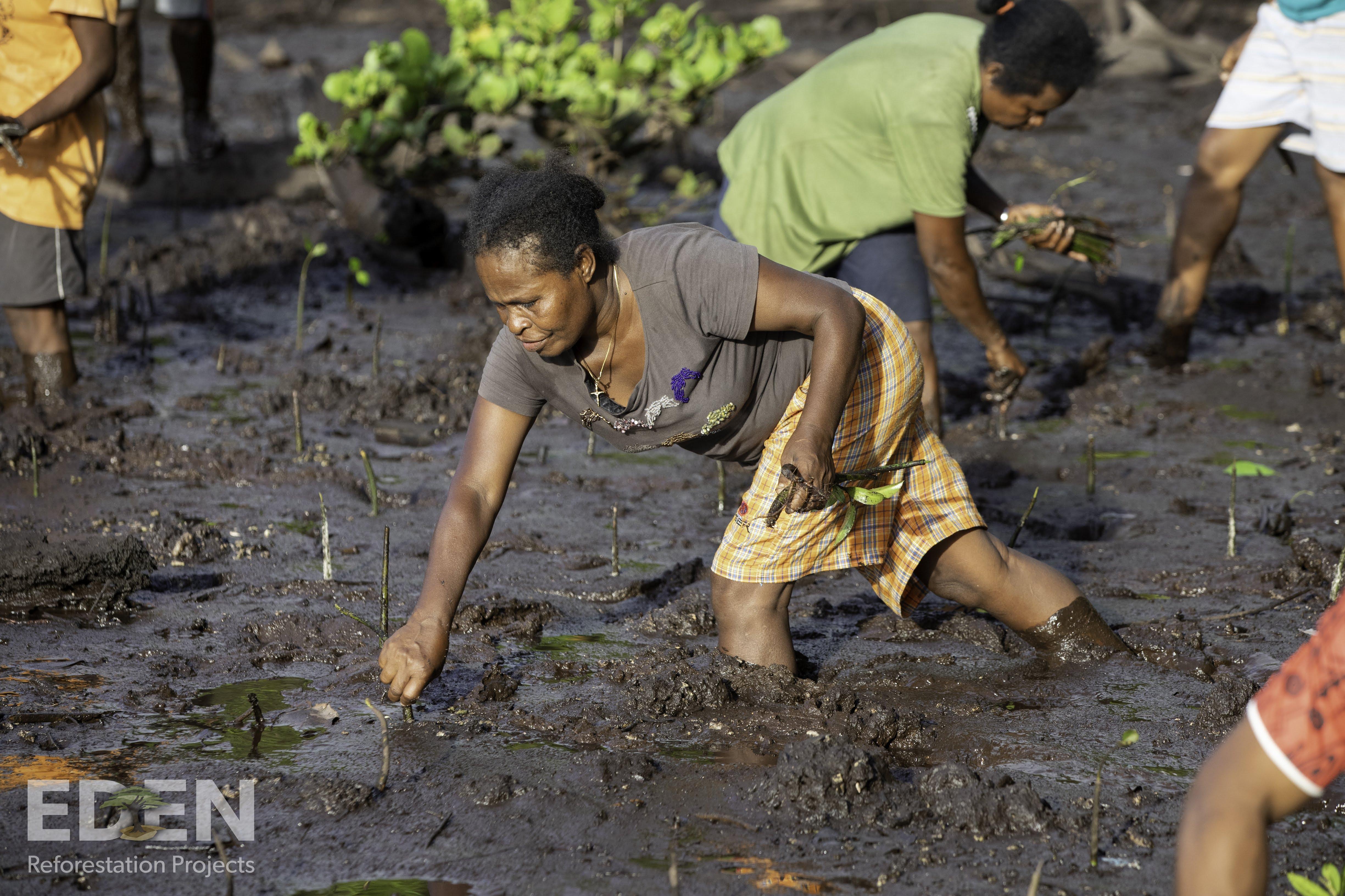 Stecklinge werden im Zuge des Schrott24 Umweltprojekts gepflanzt