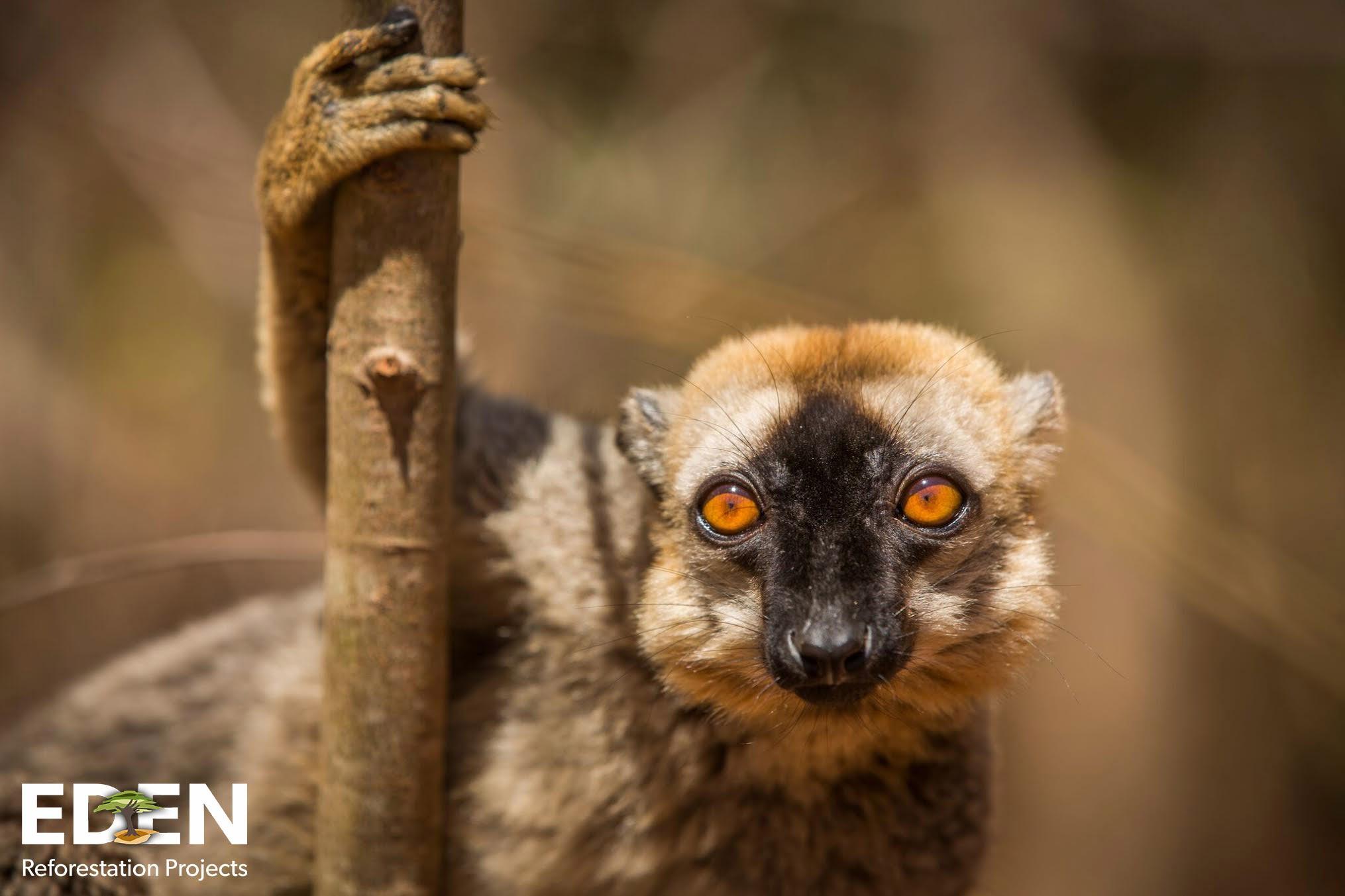 Tierarten kommen in die aufgeforsteten Wälder zurück